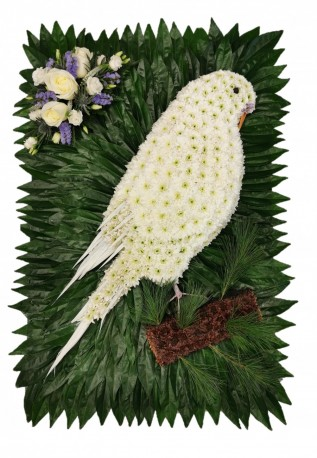 Budgie Funeral Tribute